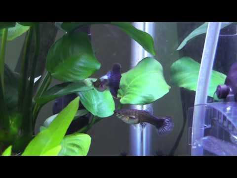 Planted Tank update 3-Plant grown and algae battle