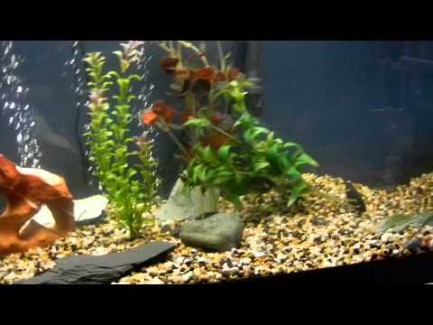 huge 125 gal fish tank