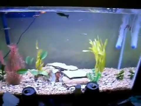 2. 30 gallon with fish and plants.