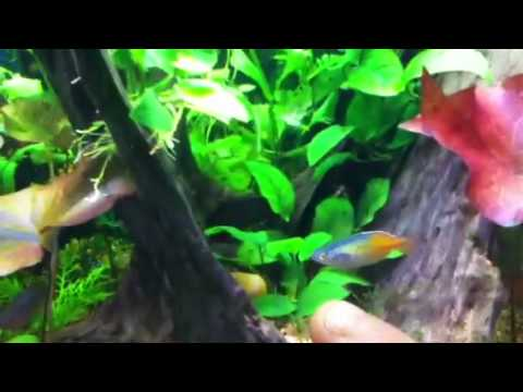 Update of the rainbow/roseline shark tank