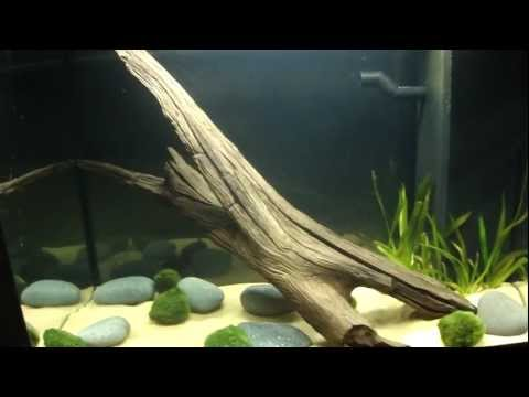 New 20gal Tank. Moss Wall/ Shrimp tank 23/12/11