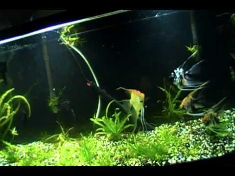 Fish Room Update
