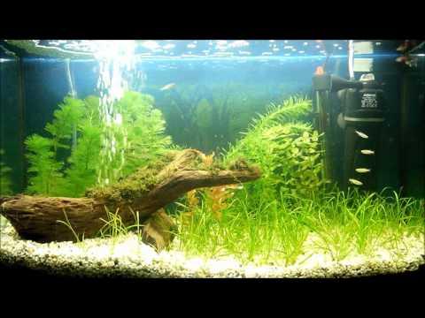 My Planted Aquarium In HD