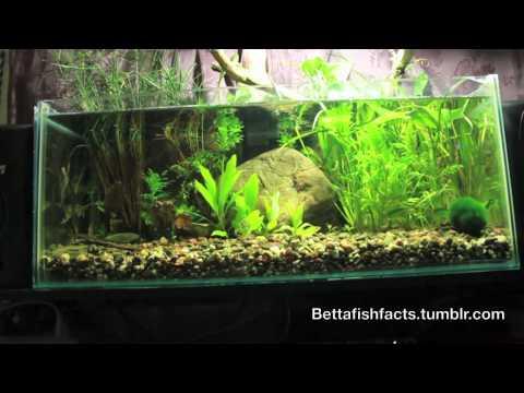 Ep. 5 For The Beginner Betta Fish Hobbist