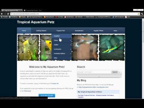 Aquarium Website: Tropical Aquarium Fish