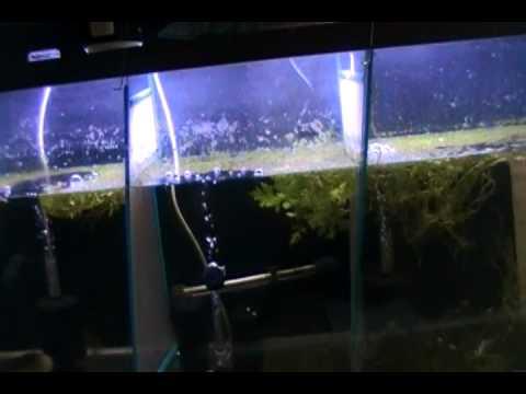 Making Money Off Fish Episode 3