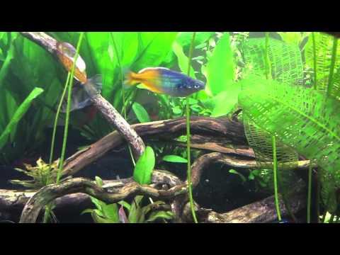 Genesis of a 120 gallon fish tank