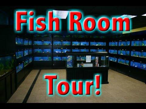 FISH ROOM TOUR 9/15/12