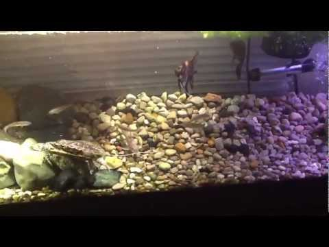 Feeding turtle and catfish