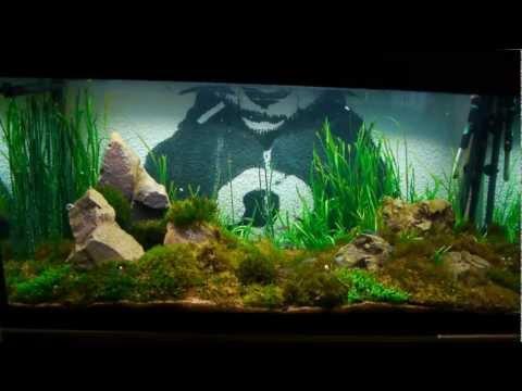 Oskarlover131 Hikari contest! RCS and Amano shrimp.