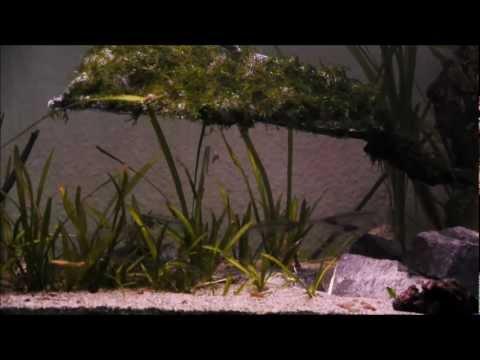 Moss tree for Glassfish - Vx Tanks