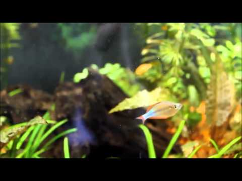 Dealing with algae; putting snails back