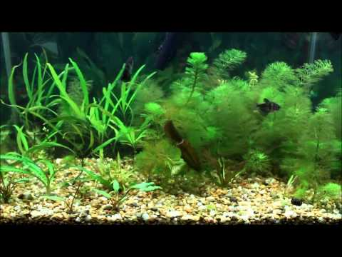 New plants, new fish, and ramblings about iron