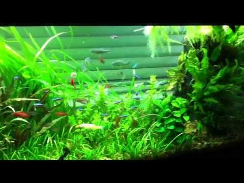 55 gallon planted freshwater tank - May 28, 2013 update