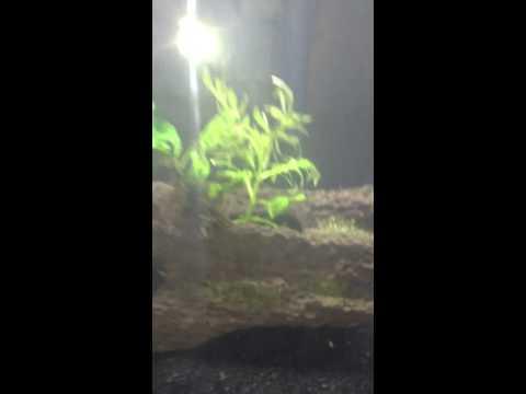 20 gallon long planted