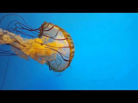 Baltimore National Aquarium, MD Full HD