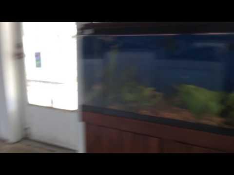 Pete's Aquarium Fish Store