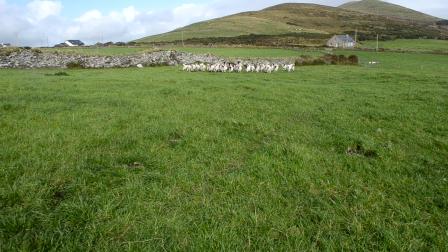 Mind the Sheep