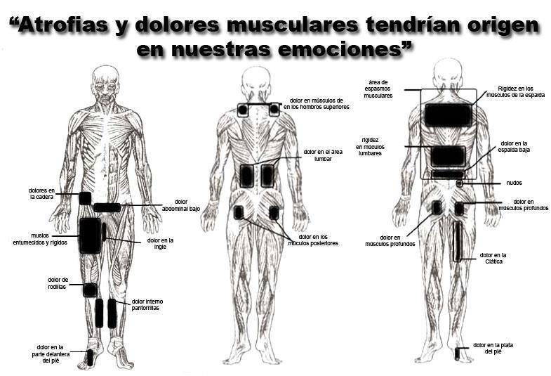 ATROFIAS Y DOLORES MUSCULARES TIENEN ORIGEN EN NUESTRAS..