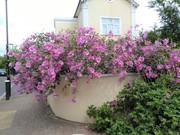 Clarence corner flowers 1