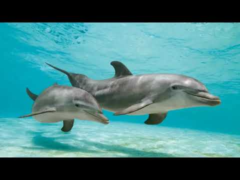 Dolphin Journey Activation & Healing Session - Releasing hurts, pains, what's holding you back