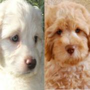 F, Calla & Luca