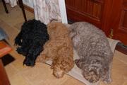 Wyn, Lilly,Cassie & Buddy