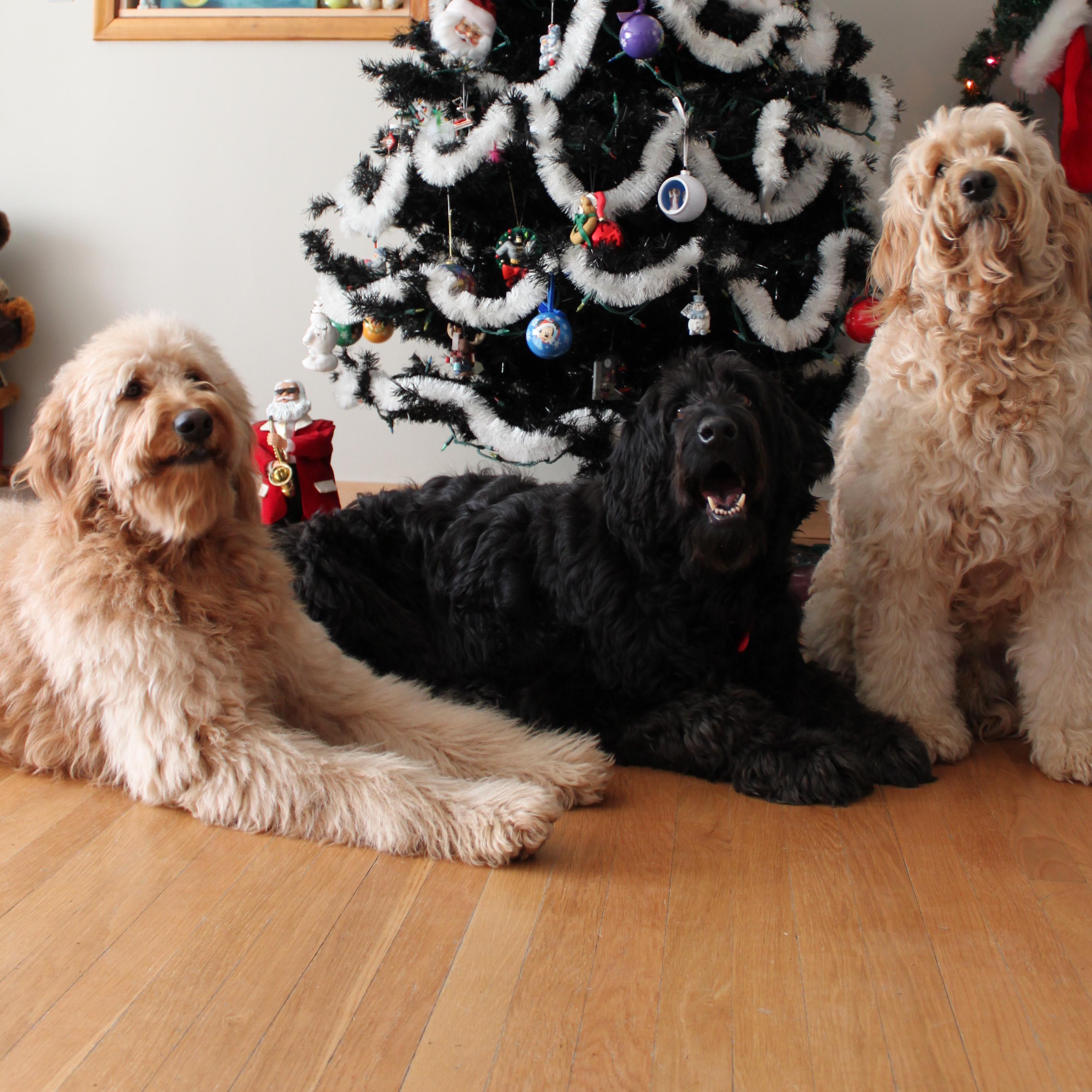Clifford, Cloud, Jake..and Kim