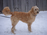 Cody (The Washingtons)