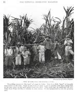 NGM 1920-07 Pic 04