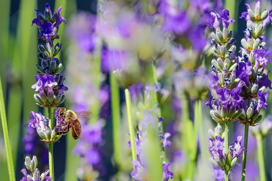 l'ape buona!!