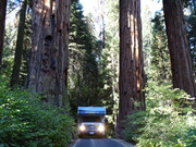 Squeezed between Sequoias