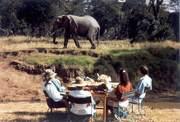 Superb Africa Safaris