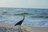 Gulf Shores Orange Beach Tourism