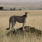 Kenya Safaris Holiday