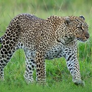 Peter Africanparadise Safaris