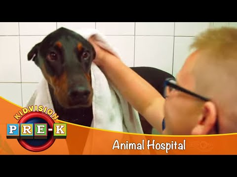 Affordable Pet Care | House Call veterinarian - Silver Spring Veterinary Hospital
