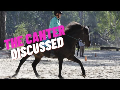 Developing Your Eye: Judge The Canter In Dressage