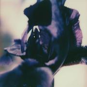 Il mio fiore nero