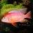aFish4everyone