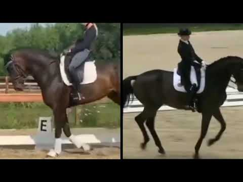 FREE Dressage Lessons With Brittany Fraser Beaulieu!