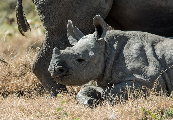 AI in the sky to help stop rhino poachers