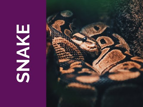 SNAKE Meaning: Grounded, Patient, and Present (Spirit Animal, Power Animal, and Totem Series)