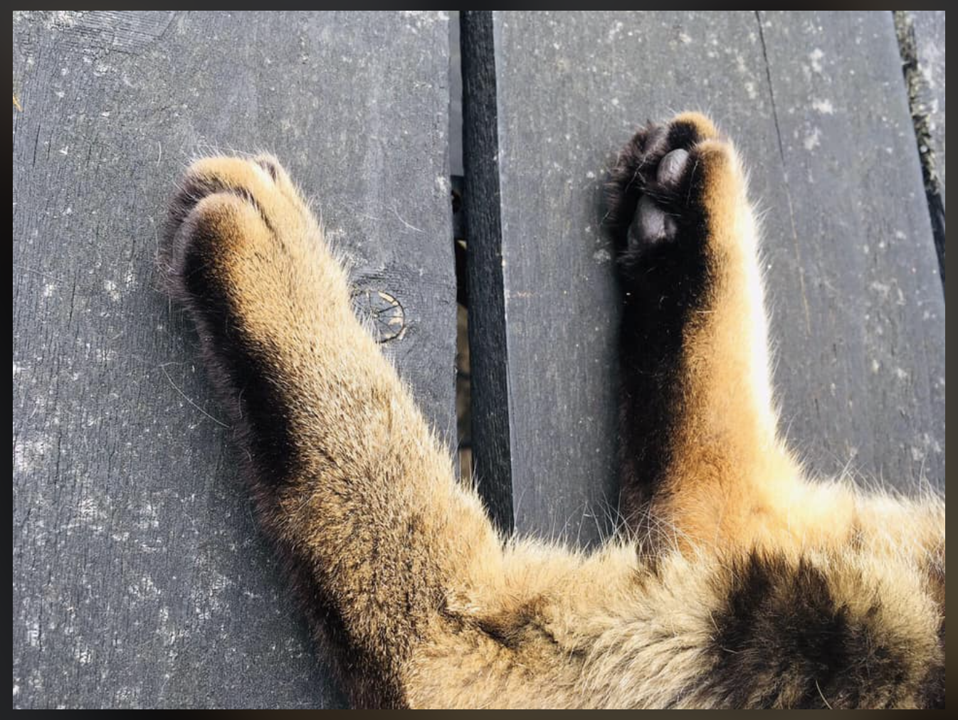 Noels. feet