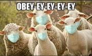 Obey-ey-ey-ey-ey