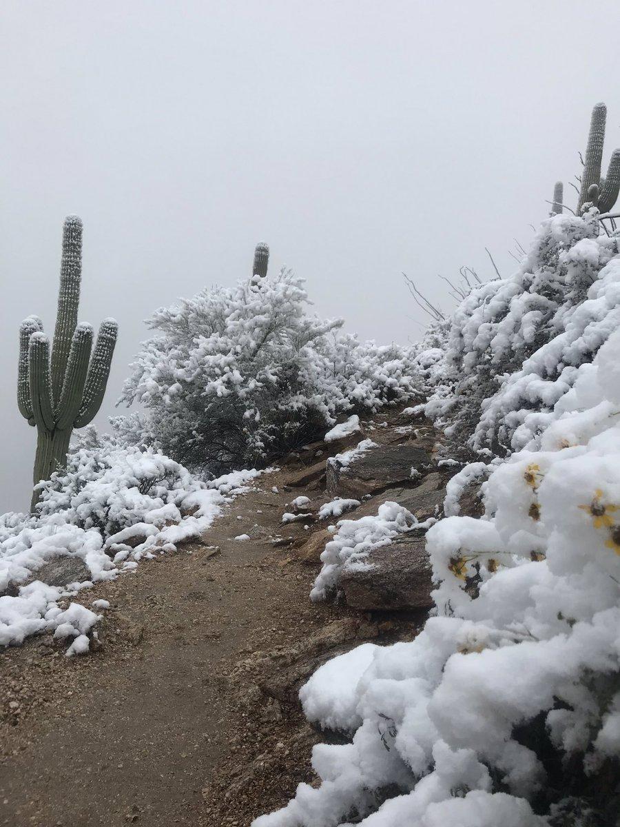 თოვლი უდაბნოში, დათოვლილი არიზონა, არიზონას უდაბნო, ამერიკა, თოვლიანი ამერიკა, qwelly, snow, arizona snow in arizona