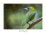 Kingfisher Green