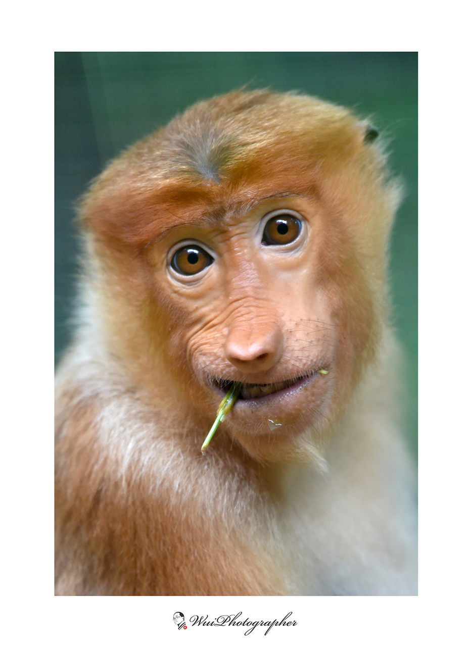 Proposic Monkey