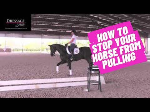 How To Fix A Horse That Pulls On Your Hands