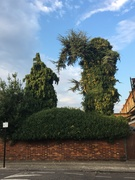 Cosmic Topiary on Noel Park